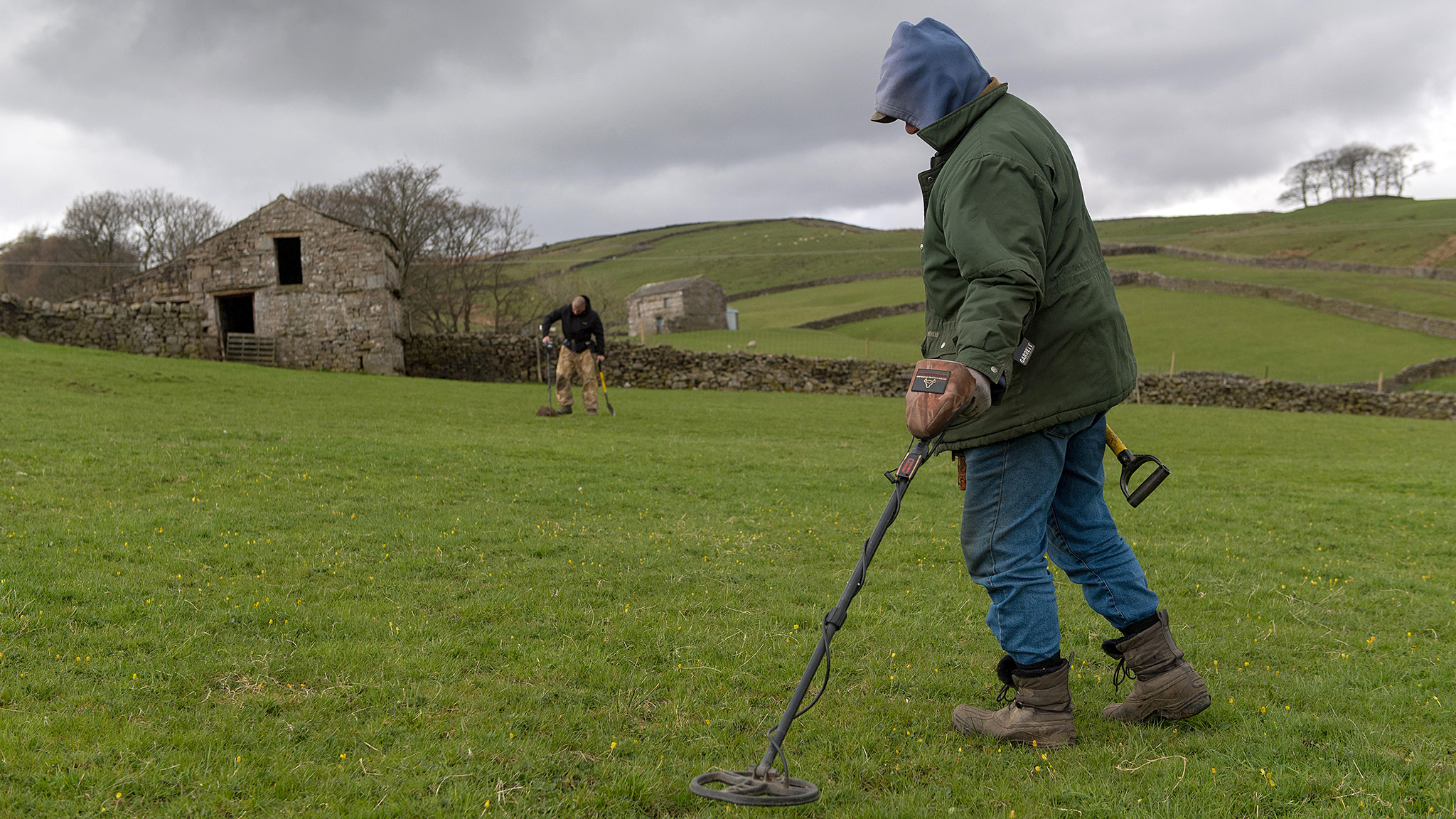 Metal detectorists searching farmland for metal artefacts